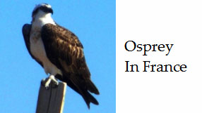 Wildlife And Nature In France