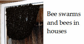 Bee-swarms-in-french-houses-and-gardens